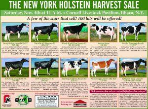 November 4, 2017 | NY Holstein Harvest | Ithaca, NY