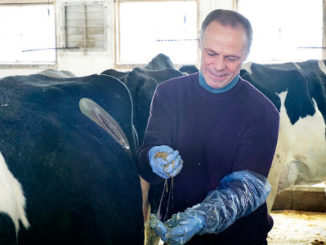 UW-Madison dairy science professor Michel Wattiaux in a campus dairy facility in March 2018. (Photo by Molly Levine/UW-Madison Department of Dairy Science)