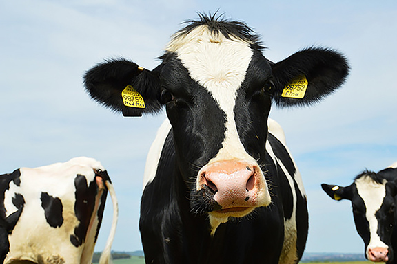 DairyBusiness News (Tobias Nordhausen, Flickr/Creative Commons)